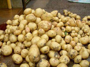 DİQQƏT: Kartofdan zəhərlənə bilərsiniz – Video