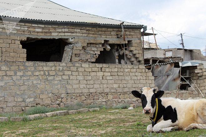 Atılmış evlərin həyəti mal-qaranın otlaq yerinə çevrilib