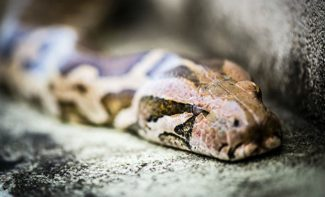 Ilanların fəal dövrü başlandı – Zoologiya İnstitutundan XƏBƏRDARLIQ