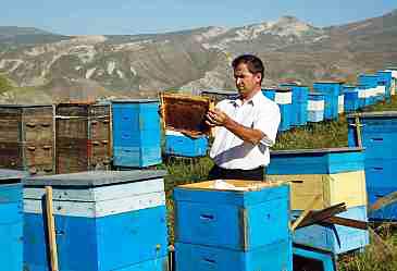 Arıçılıqla məşğul olan şəxslərə pul veriləcək