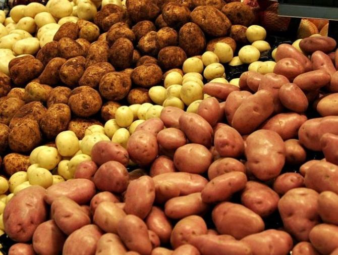Azərbaycan kartof idxalından imtina etməyi planlaşdırır