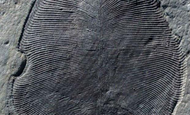 Tarixi dəyişdirəcək kəşf — 558 milyon illik sirr