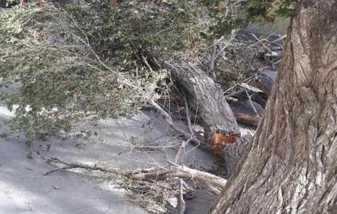 Bakıda 30-a yaxın ağac aşdı: Gücləndirilmiş iş rejimi tətbiq olundu – Foto