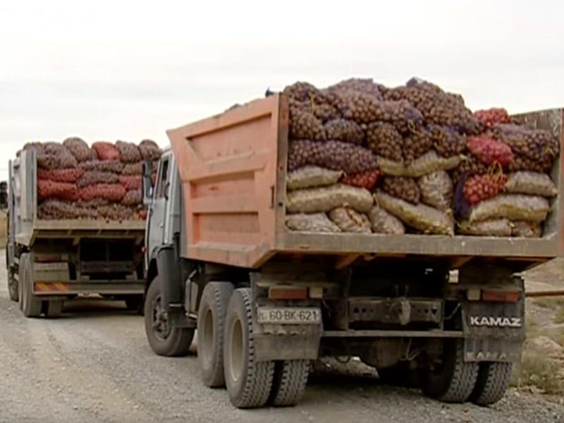 Türkiyədən Azərbaycana gətirilən 50 ton kartofda zərərverici aşkar olunub – VİDEO