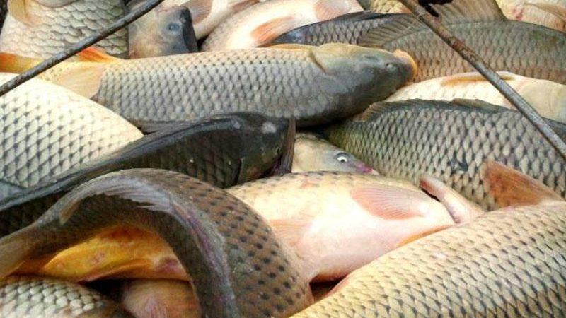 Bakının balıq bazarından dəhşətli fakt – Nəcis axıdılan göllərdə yetişdirilirmiş