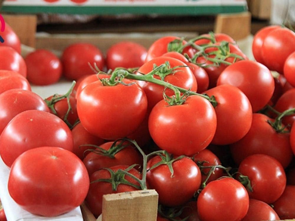 Rusiya 15,5 ton pomidoru Azərbaycana qaytarıb