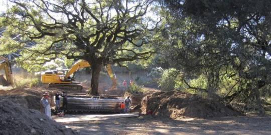 Tarixi ağacı çıxaran cütlüyə inanılmaz cəza: 586 min dollar cərimə ödəyəcəklər