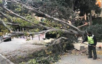 Xətaidə ağaclar kəsilib – Nazirlik icazə vermədiyini açıqladı