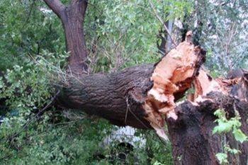 Bu dəfə ağac 20 yaşlı qızın başına düşdü – vəziyəti ağırdır